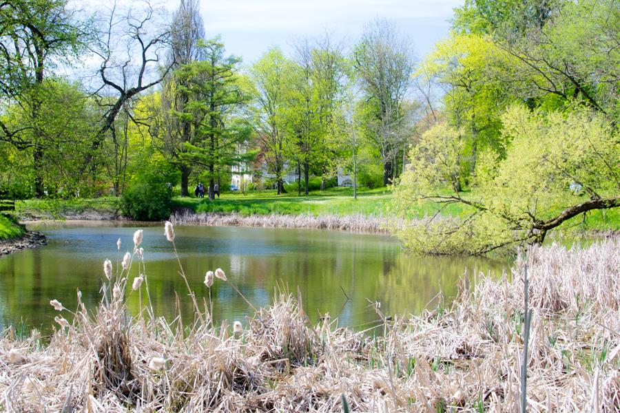 un lac dans le parc de gotha